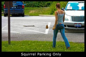 Squirrel Parking Only by XeoPhoto