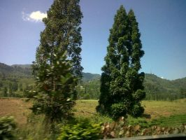 puncak pass, Indonesia by L-TheWindGirl