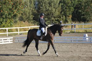 Dressage 10 by Chance-STOCK