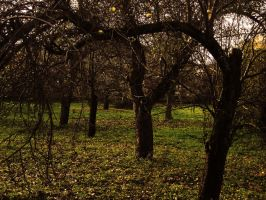 Apple orchard by TSSTL
