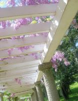 Wisteria tunnel 1 by Reyphotos
