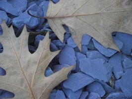 Leaves upon Blue by JannaLowe
