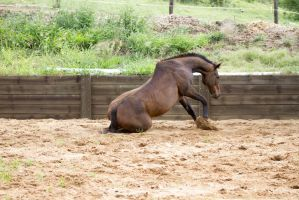 Km old TB sitting getting up side view 1 by Chunga-Stock