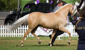 STOCK - TotR Arabians 2013-5 by fillyrox