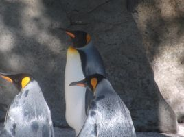 Trio of Penguins by Fran48