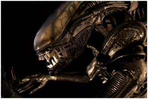 Alien One Two Three by MikeMonaghanPhoto