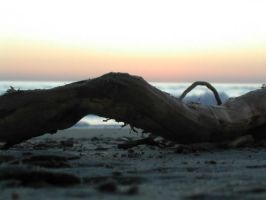 Branch on the sea II by Ivette-Stock