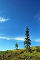 Hill and Tree by Hxes