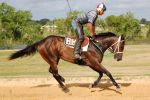 Racehorse 13 by ForeverEndlessly