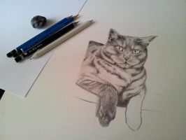 Cat portrait in progress by Maberg