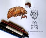 Scientific Illustration Cicada, Chicharra by Daviddleonluis
