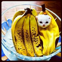 Bananas Anyone? :) by ImperfectionMoi
