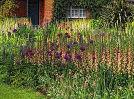 cottage garden by awjay