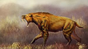 Smilodon populator Restored by TheDragonofDoom