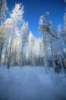 Beautiful winter day. by KariLiimatainen