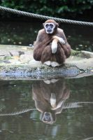 Monkey reflected in the water by BLAxBLA