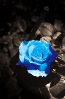 Blue Rose by voodoosimon