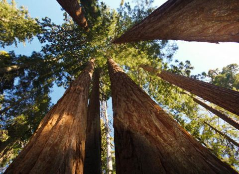 Sequoia national park by uros2006