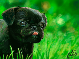 30 minutes challenge: Pug by Mariana-S