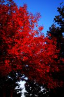 Red by megannicolephoto