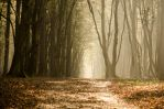 Walking between rays and autumn mist by XanaduPhotography
