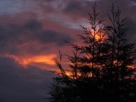 Sunset trees by jmasser