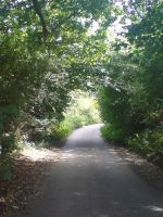 Woodlands Path by EmKins-Resources