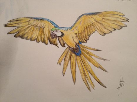 Blue and yellow macaw by Fem96
