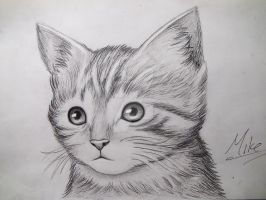 Cute Kitty Drawing by MCorderroure