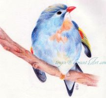 My Little Song Bird by toujin