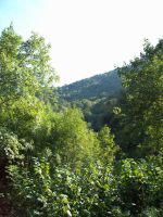 100 1657 Walking to Covadonga trees and forest by fueledbyfreestock