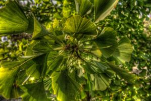 Green HDR by jverm
