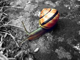 colorful snail by MangChib