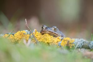 Toad II by Justysiak
