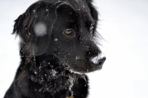 Dog and snow by jpletarte