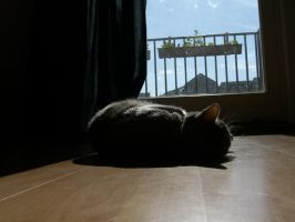 Shadow Of A Cat 2 by ErinM2000