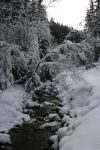 Winter Stock 4 by Midwinter-Stock