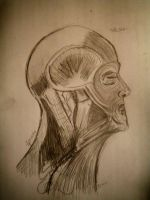 sketch study: muscles by angelthanatos