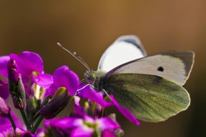First Butterfly of 2009 by dalantech