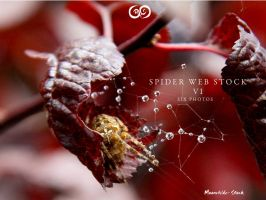 Spider Web Pack VI Stock by Moonchilde-Stock