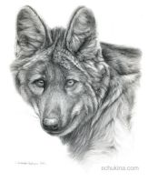 Maned Wolf portrait by sschukina