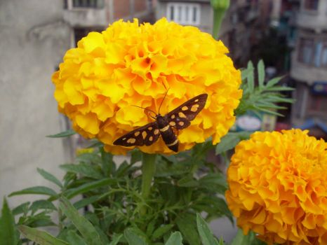 Butterfly In Flower by parishad