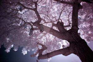 IR Tree by eivaj