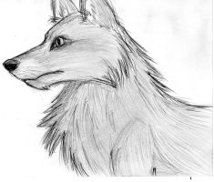 Wolf by Kittycatrat