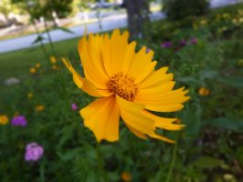Vibrant Yellow. by Sparkle-Photography