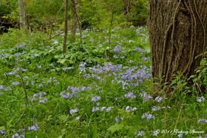 Flowers in the Woods by AppareilPhotoGarcon