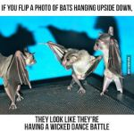 Flip a photo of bats by cosenza987