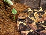 Curled up Snake by winterface