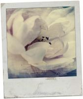 Worn Polaroid by kml91225