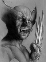 Wolverine Portrait Sketch by benke33